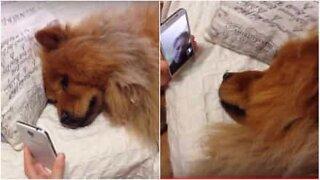 Trengende hund er på FaceTome med eieren
