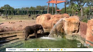 #TampaBay bucket list: ZooTampa at Lowry Park at Lowry Park