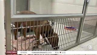 Nebraska Humane Society holds stocking stuffer drive for animals