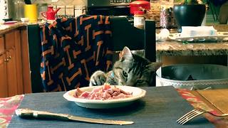 Cautious cat takes his sweet time stealing food on table
