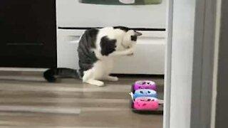 Ce chat mange avec ses pattes