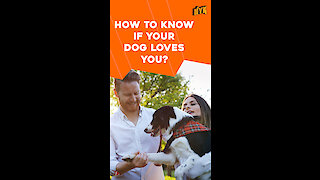 Top 5 Signs Your Dog Loves You *