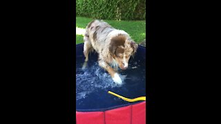 Pup splashes in baby pool just like a little kid