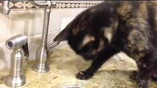Cat introduced to running water, tries to attack it