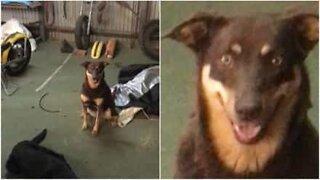 Den här hunden vet hur man poserar för en bild
