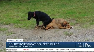 Police investigate deaths of two dogs