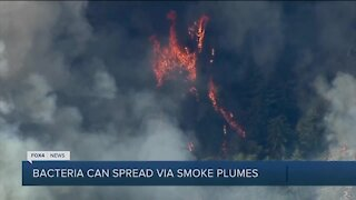 Wildfires can spread bacteria