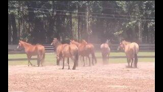 Nearly two dozen neglected horses taken to rescue group