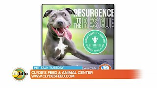 Pet photo contest - What pet is the face on the new Resurgence beer can?