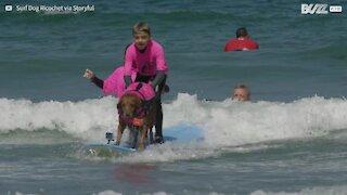 Cane surfista aiuta bimbo autistico in acqua