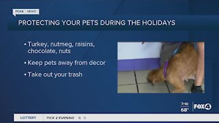 Protect your pets during the holiday