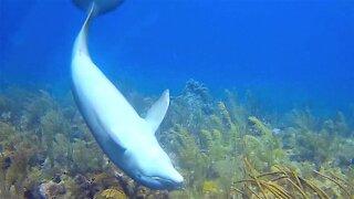 Veteran scuba diver shows us his most breath taking animal encounters
