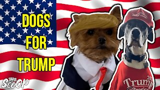 People Show Off Their Trump Supporting Dogs