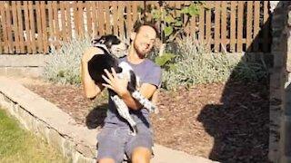 Pandemia: cão e dono reunidos 3 meses depois!