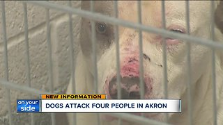 4 people, including mail carrier, attacked by pack of 3 dogs in Akron