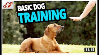 🐕 Basic Dogs Training – TOP 10 Essential Commands For Every Dog Should Know!