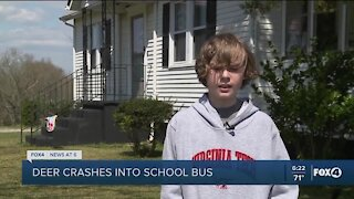 Deer crashes through school bus windshield, lands on sleeping student