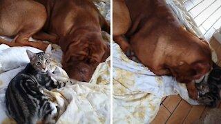 Sweet dog & cat friendship will melt your heart