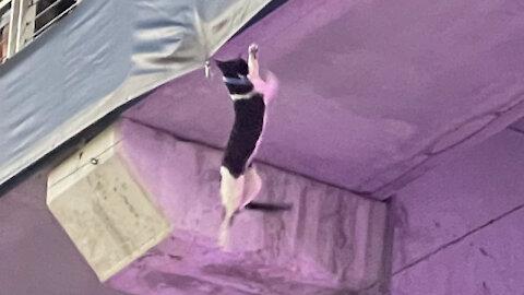 CAT FALLING AT MIAMI HARD ROCK STADIUM 9.11.2021