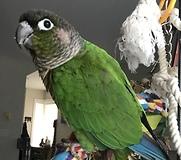 Parrot loves rap music