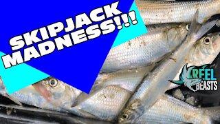 Skip-jack Madness