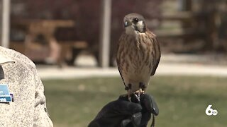My Idaho: World Center for Birds of Prey
