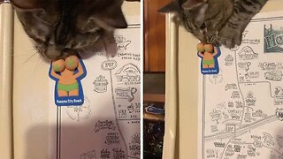 CHEEKY CAT PLAYS WITH NAUGHTY FRIDGE MAGNET