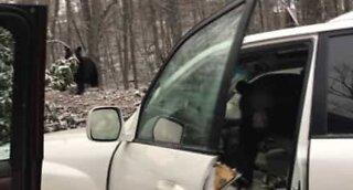 Karhu jäi jumiin autoon Yhdysvalloissa!