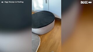 Dog prefers his bed upside down