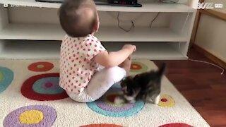 Gatinho faz de tudo para chamar a atenção de bebê