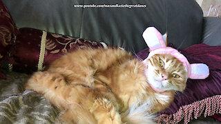 Patient cat not Impressed with rabbit hat costume