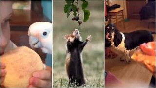 These animals will do anything for food