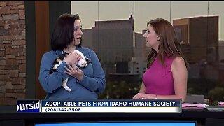 Idaho Humane Society: Tilda