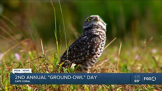 Second annual ground owl day Cape Coral
