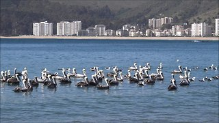 Papudo Province and beach in Chile