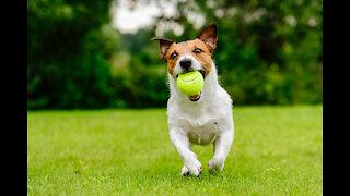 Watch dog soccer skill