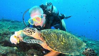 Scuba diver befriends critically endangered hawksbill sea turtle