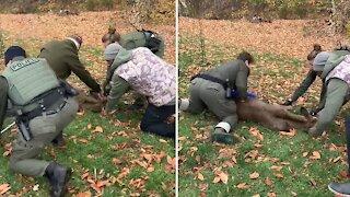 Police rescue buck tangled in soccer net