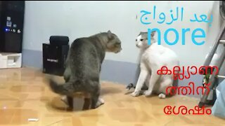 Two cat fights