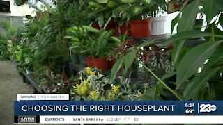 Growing Your Garden: Choosing the right houseplant