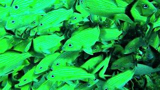Scuba diver swims through a school of beautiful tropical fish