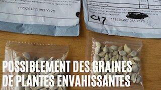 Des Québécois ont reçu d'étranges graines de Chine et les autorités les mettent en garde