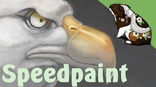 Bald eagle speedpaint