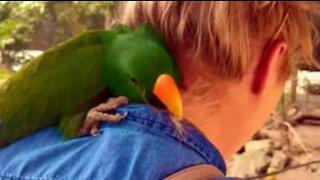 Amor à primeira vista: ave carinhosa não desgruda de mulher