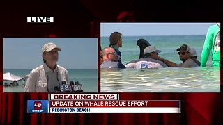 Update on whales stranded on Redington Beach