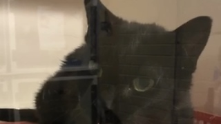 Courteous Cat Says 'Hello' To Everyone Who Visits Her