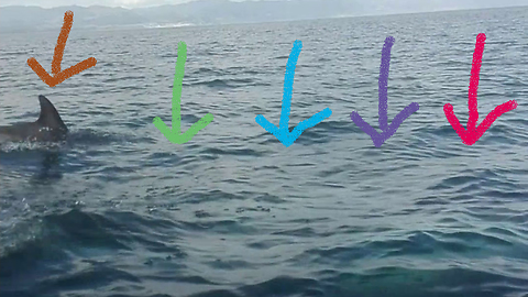 Dolphins stop a great white shark from attacking our boat