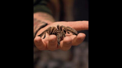 A Day At The Zoo – Holding A Tarantula!