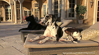 Laid back dogs love to lounge in the Florida sunshine