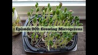009: Growing Microgreens